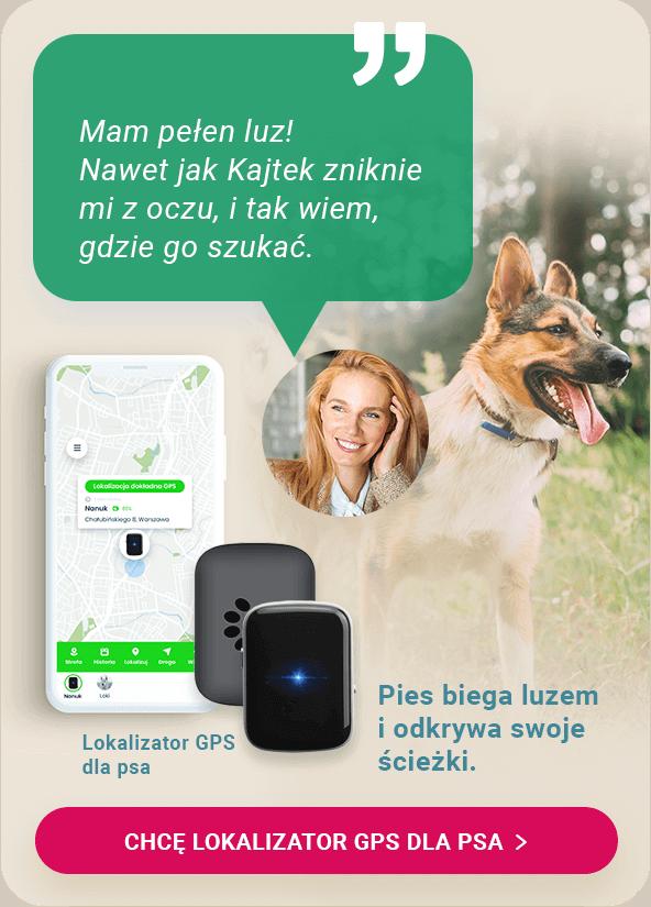 Lokalizator GPS dla psa z aplikacją Bezpieczna Rodzina na telefon właściciela